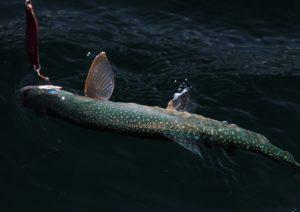 ダークグリーンの体色が特徴的
