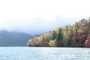 産卵後、湖水に戻る魚もいる秋の然別湖
